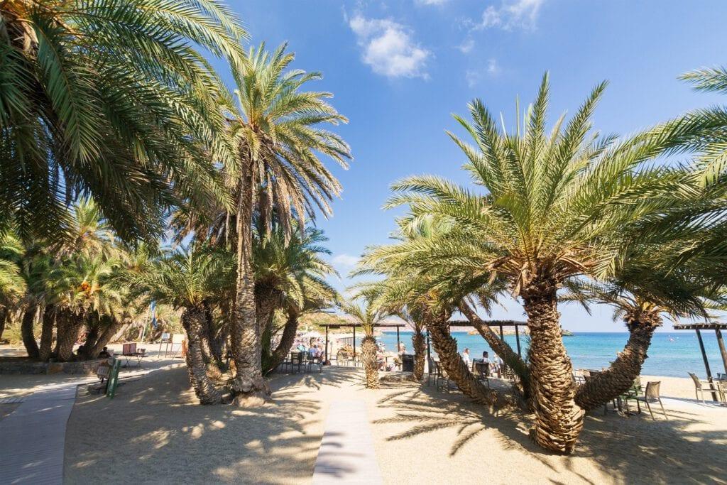 Palms in the beautiful Vai beach, Crete